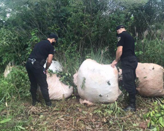 San Pedro: cosecharon de forma ilegal yerba mate silvestre en una reserva natural