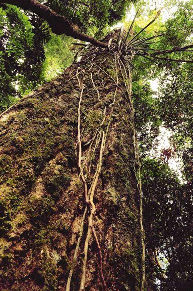 Bosques, refugios de la biodiversidad y el termómetro climático
