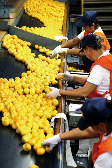 Se retrasan cosechas en Misiones por falta de mano de obra rural