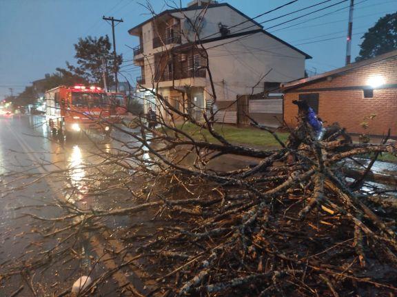 Postes, árboles, y ramas caídas, el saldo de una nueva tormenta en Posadas y alrededores