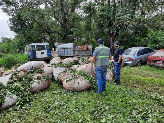Detectan que hay una mafia organizada para robos de yerba y ganado en misiones