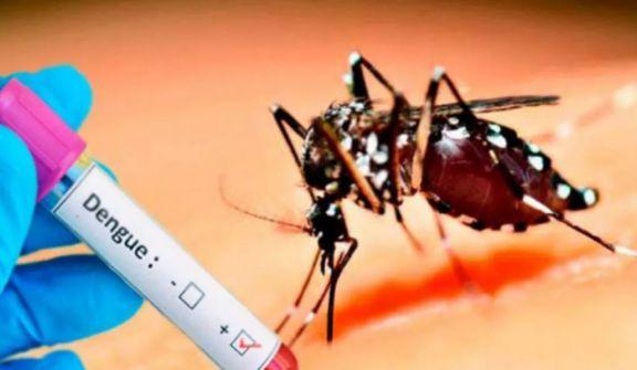 Vacuna contra el dengue evita el 83% de las internaciones en estudio Fase III
