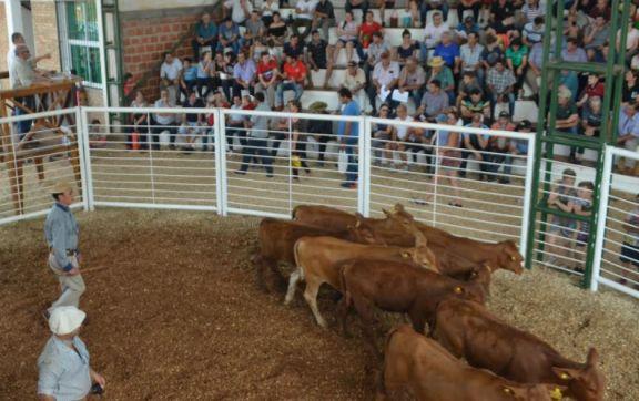 Vuelven los remates presenciales de ganado vacuno en Andresito