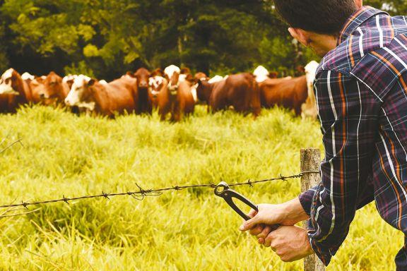 Los múltiples perjuicios del robo de ganado