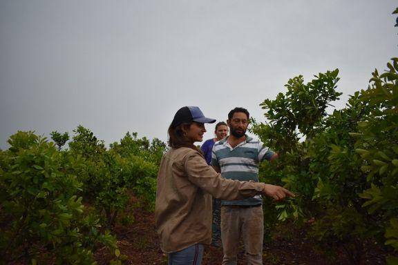 San Pedro: realizarán campaña para el registro de productores yerbateros