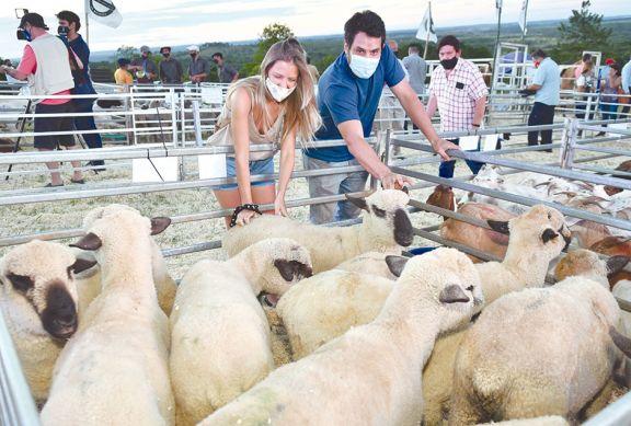 Productores se entusiasman con la cría de ovejas y chivos en chacras