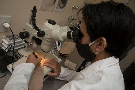 Estudios indican efectividad en la  técnica del insecto estéril en Posadas
