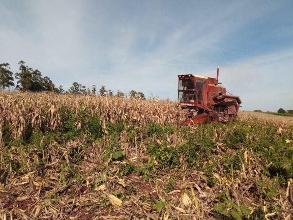 Capacitaron para la próxima siembra de maíz en la provincia