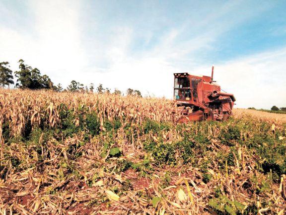 Productores, con hasta 80% de caída en el rinde por la sequía de 2020