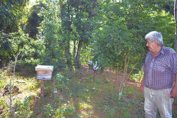 Eldorado: pondrán en funcionamiento una fábrica de colmenas