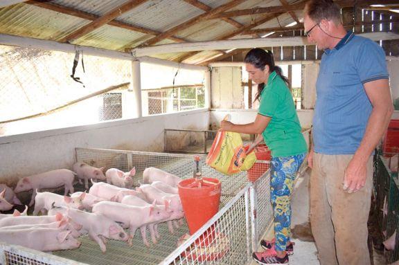 El sector porcino se amplía en Misiones con más colonos y producción de carne
