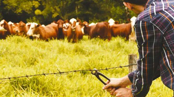 En tres años, le robaron 50 cabezas de ganado