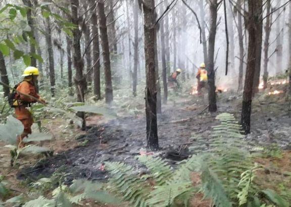 Bomberos Voluntarios de Puerto Libertad sofocaron nuevos incendios forestales
