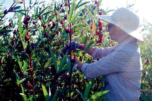 Auge de emprendimientos ecológicos ante el creciente uso de productos naturales