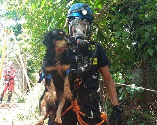 Bomberos de Iguazú rescataron a un perro de un pozo de 15 metros