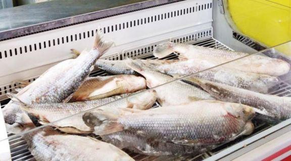 En Oberá y Campo Viera comenzará mañana la venta de pescado congelado a precios accesibles