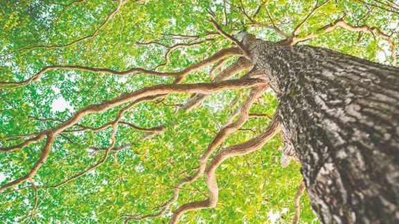 Bajo la sombra de los árboles