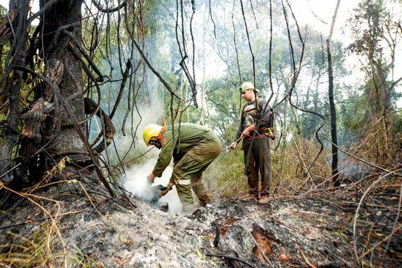 Reforestan áreas arrasadas por incendios de noviembre