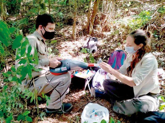 Fiebre amarilla: continúa el rastrillaje en Misiones