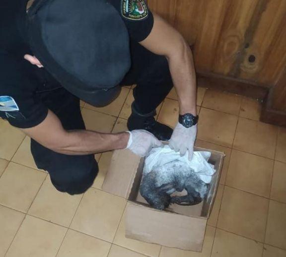 Candelaria: rescatan a un perro abandonado en pésimo estado de salud y advierten que la problemática va en aumento