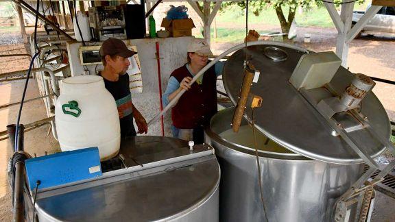 Con más de 300 familias productoras, se consolida la industria láctea local