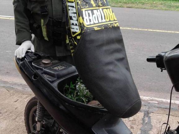 Chaco: rescatan a un Tatú mulita que viajaba en el baúl de una moto