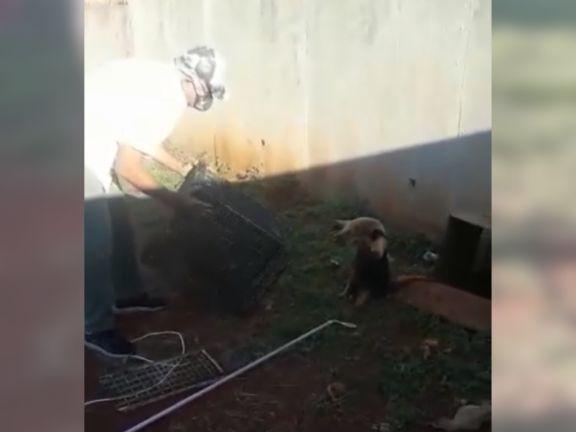 Posadas: regresó a su casa y se encontró con un Oso Melero durmiendo en su patio