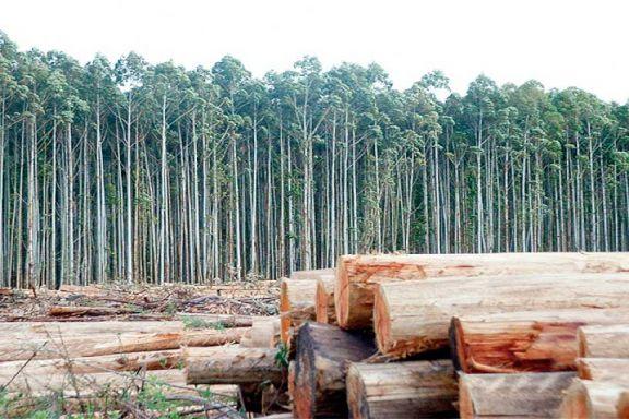 En el último año los insumos maderables duplicaron valor