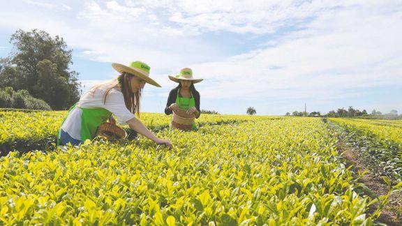 Los campos de brotes verdes son protagonistas del turismo rural