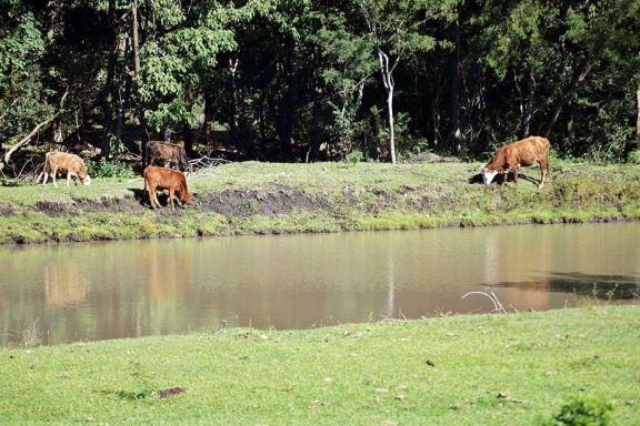 Conciencia ambiental y más árboles nativos