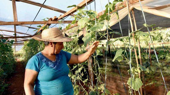 Poner en valor el trabajo  de la mujer rural para alentar su desarrollo