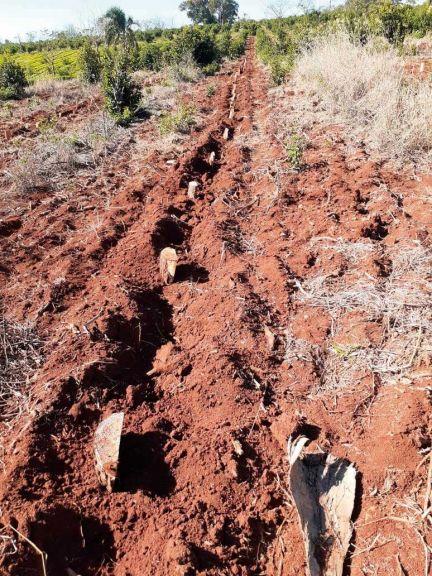 Sorpresa e indignación por robo de yerba recién plantada