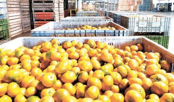 Apertura al mercado de Estados Unidos de frutas dulces impactará fuertemente en Misiones