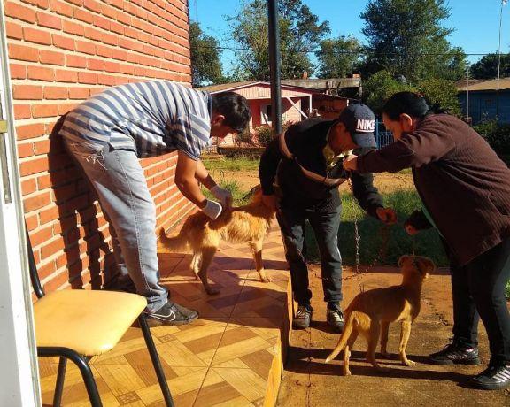 Santo Pipó: habrá vacunación antirrábica en el barrio Municipal