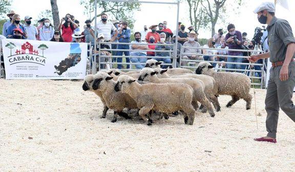 Exposición de pequeños animales mostró alternativas para la cría local