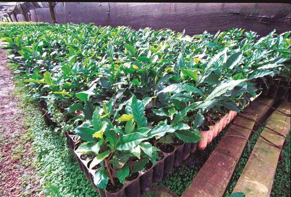 El Inym prohibió plantar más de 5 héctareas nuevas de yerba