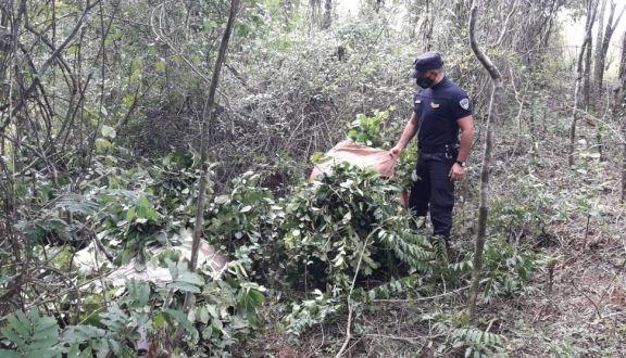 Operativos rurales: cuatro detenidos por robar yerba mate en Santo Pipó y San Pedro