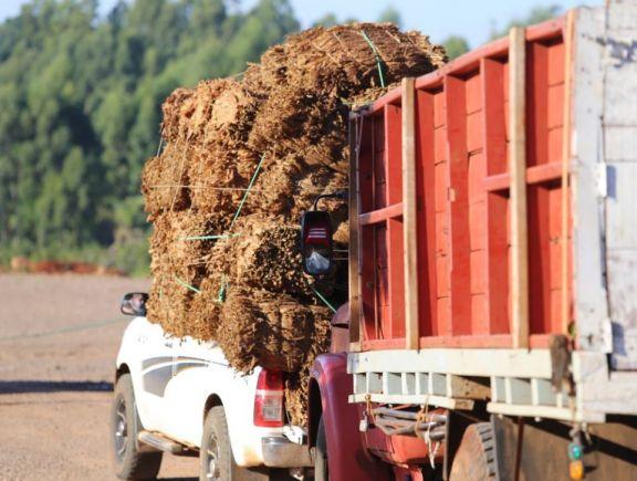 La sequía afectó un 16 por ciento la producción tabacalera en Misiones