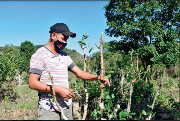 Por hurtos de yerba, un colono ya perdió casi el total de la cosecha