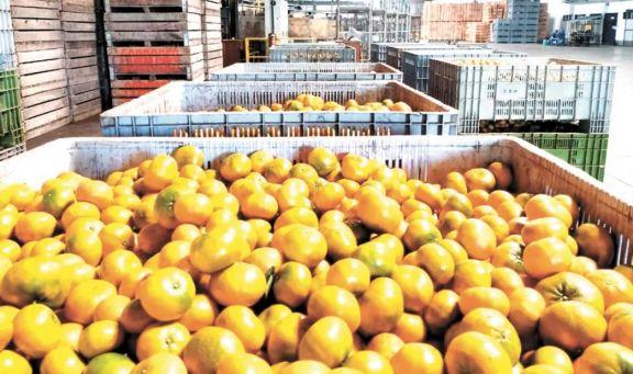 La Afip extendió beneficios para la cadena citrícola en Misiones