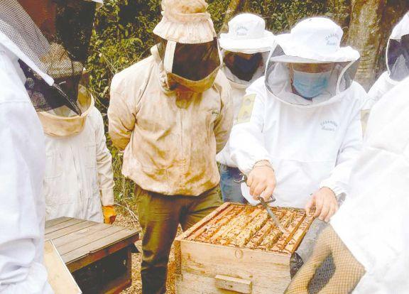La producción de miel de abejas no llega a cubrir la alta demanda