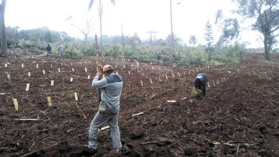 Continúa el debate por la decisión respecto de la plantación de yerba