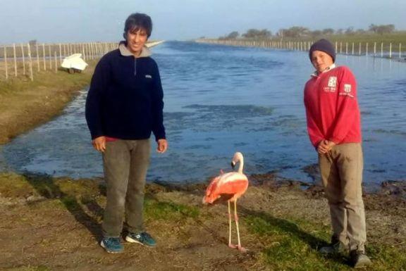 Un flamenco de una especie amenazada fue rescatado y liberado en un bañado de Santiago del Estero