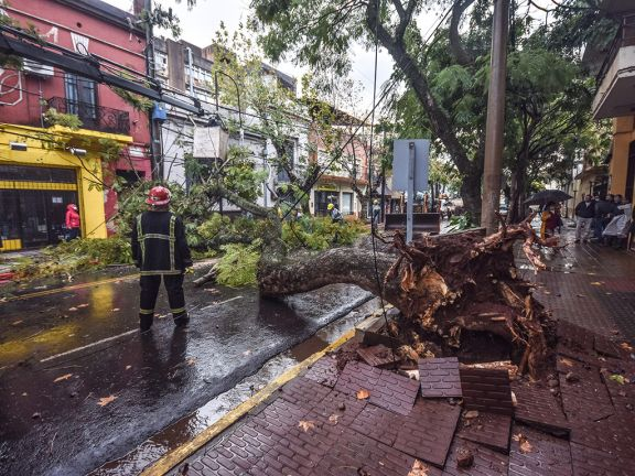 Caída de un enorme árbol en calle Sarmiento y daños en viviendas por la tormenta en Posadas