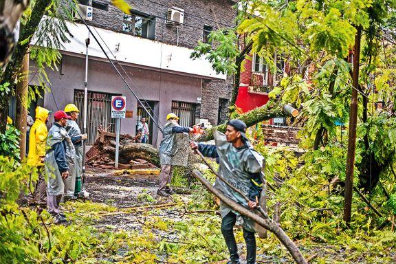 El temporal dejó árboles caídos y casas destechadas en Posadas