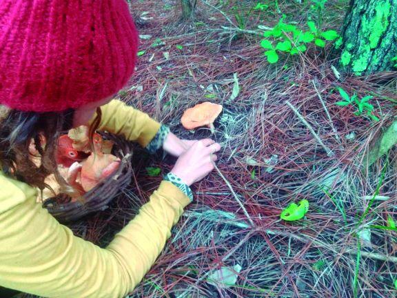 Apuntan a una economía circular mediante recolección de hongos comestibles