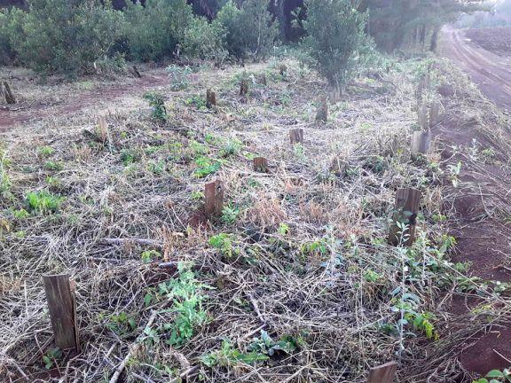 Heladas más sequía llevan a malvender ganado