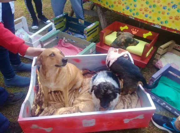 Estudiantes fabricaron y donaron camas para los animales rescatados por Patas Sucias