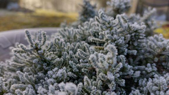 En Capioví se registraron fuertes heladas
