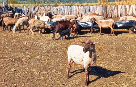 Promueven la actividad ovina  y caprina al Sur de Misiones